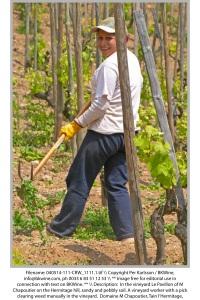 Manuellt arbete i vingarden