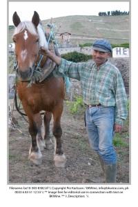 Häst med förare i en vingård